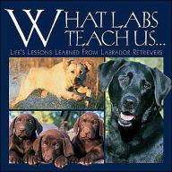 What Labs Teach